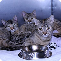 Adopt A Pet :: Mean Girls - Lumberton, NC