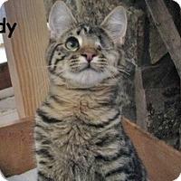 Adopt A Pet :: Rudy - Polson, MT