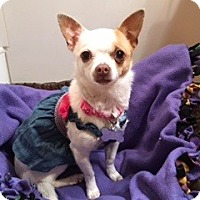 Adopt A Pet :: Freesia - Las Vegas, NV