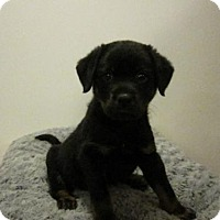 Adopt A Pet :: Baby Scooter - Rockville, MD