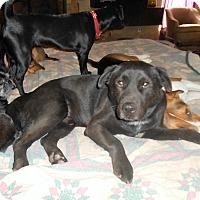 Adopt A Pet :: Salem - North Jackson, OH