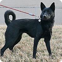 Adopt A Pet :: Aurora - Nashville, TN