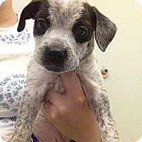 Adopt A Pet :: Merlin - Alamosa, CO