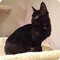 Adopt A Pet :: Duncan - East Hanover, NJ