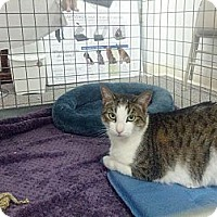 Adopt A Pet :: Melody - london, ON