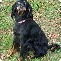 Adopt A Pet :: Gracie - DeKalb, IL