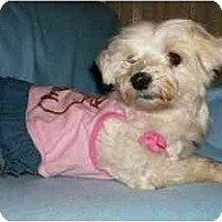 Adopt A Pet :: Hannah - Mooy, AL