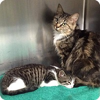 Adopt A Pet :: Vanessa and Babbs - Harrisburg, NC