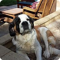 Adopt A Pet :: Alamea - Bellflower, CA