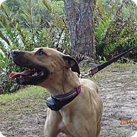 Adopt A Pet :: LYKA - Oviedo, FL