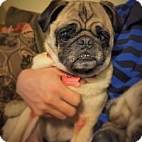 Adopt A Pet :: Buckwheat - Austin, TX