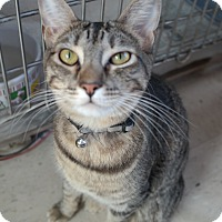 Adopt A Pet :: BLUEBELL - San Pablo, CA
