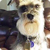 Adopt A Pet :: Dasha - Sharonville, OH