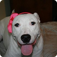 Adopt A Pet :: Bellina - Little Rock, AR