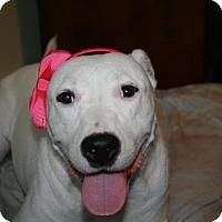Adopt A Pet :: Bellina - Little Rock, AR