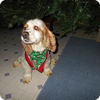 Adopt A Pet :: Lulu  -Adopted! - Kannapolis, NC