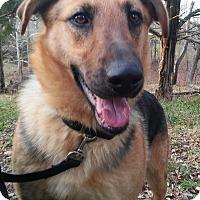 Adopt A Pet :: Mika - Louisville, KY