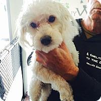 Adopt A Pet :: Huxley - Thousand Oaks, CA