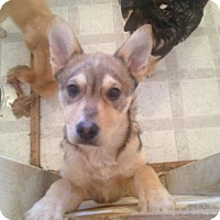 Adopt A Pet :: Sweet-tart - Saskatoon, SK