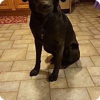 Adopt A Pet :: Bentley - New Oxford, PA