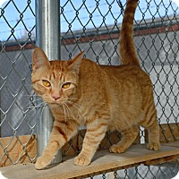 Adopt A Pet :: Faith - Gardnerville, NV
