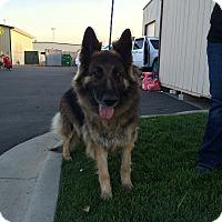 Adopt A Pet :: Gordo - Meridian, ID
