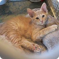 Adopt A Pet :: Cory - Geneseo, IL