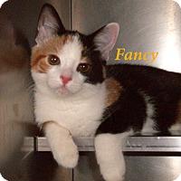 Adopt A Pet :: Fancy - El Cajon, CA