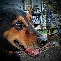 German Shepherd Dog Mix Dog for adoption in Warner Robins, Georgia - Smoke