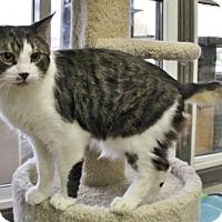 Adopt A Pet :: Rodney - Port Hope, ON