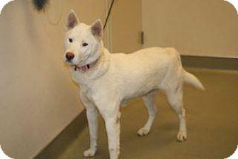 Husky Mix Dog for adoption in Wildomar, California - Simone