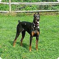 Adopt A Pet :: Rayne - Bristolville, OH