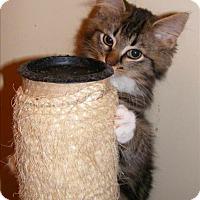 Adopt A Pet ::  - Fort St. John, BC