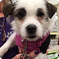 Adopt A Pet :: Sissy - Sugar Grove, IL