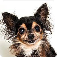 Adopt A Pet :: Cherry - San Luis Obispo, CA