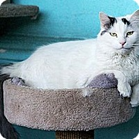 Adopt A Pet :: Juliette - Los Angeles, CA