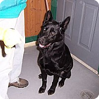 Adopt A Pet :: PIPER - Tully, NY