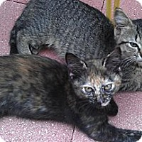Adopt A Pet :: Marble & Nala - Deerfield Beach, FL