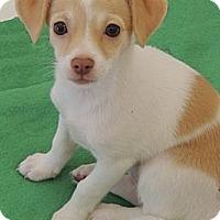 Adopt A Pet :: Mimi - La Habra Heights, CA