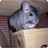 Adopt A Pet :: Charlie - Avondale, LA