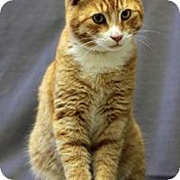 Adopt A Pet :: Bugs - Athens, GA