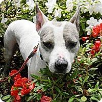 Adopt A Pet :: Victor - Houston, TX