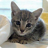 Adopt A Pet :: MAX : ADOPTED!!! - Palm Coast, FL