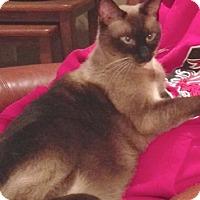 Adopt A Pet :: Isis - Lincoln, NE