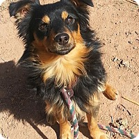 Adopt A Pet :: Mojo - Alamogordo, NM