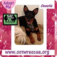 Adopt A Pet :: Sweetie - Little Rock, AR