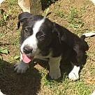 Adopt A Pet :: Baby Jethro
