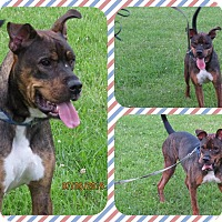 Adopt A Pet :: Bugsy - DOVER, OH