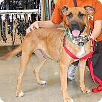 Adopt A Pet :: Debbie - West Los Angeles, CA