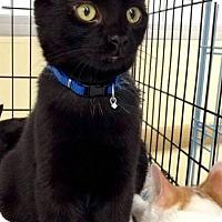 Adopt A Pet :: Derek Morgan - Muskegon, MI